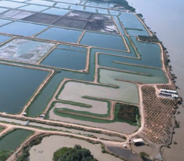 The picture shows the huge salt water ponds of Industrial Pesquera Santa Priscilla SA (IPSP) from above.